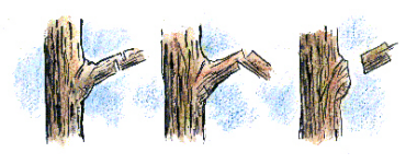 illustration of tree branch cutting